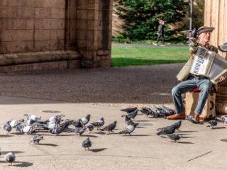 Des pigeons près d'un joueur d'accordéon