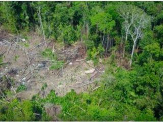 Photogrpahie aérienne d'une portion de la forêt amazonienne détruite
